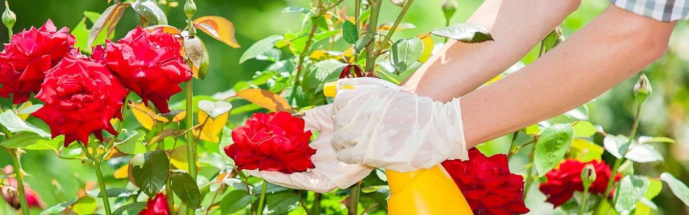 Free up your schedule with our top gardening services